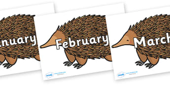Months of the Year on Echidna - Months of the Year, Months poster, Months display, display, poster, frieze, Months, month, January, February, March, April, May, June, July, August, September