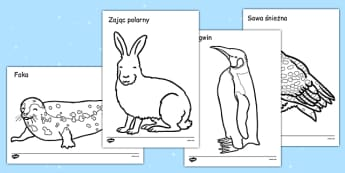 Kolorowanka Zwierzęta Polarne po polsku - zima, niedźwiedź, śnieg