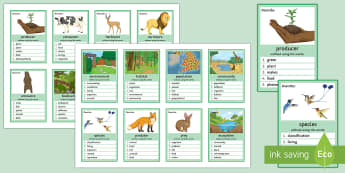 Relationships in an Ecosystem Can You Guess? Cards - Ecosystem, Food Chain, Herbivore, Carnivore, Omnivore, Energy, Consumer, Producer, Interdependence,