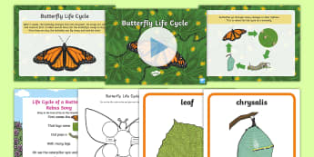 Life Cycle of a Butterfly Resource Pack - life cycle of a butterfly, life cycles of butterflies, life cycles, science life cycles, life cycles