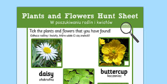 Plants and Flowers Hunt Sheet Polish Translation - EAL, translated, bilingual, grow, science, nature
