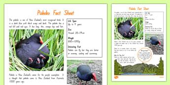 New Zealand Native Birds Pukeko Fact Sheet - nz birds, new zealand, Native, birds, animals