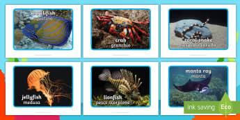 Sea Creatures Display Photographs (Under the Sea) - English/Italian  - Sea Creatures Display Photographs  (Under the Sea) - Sea creatures, photo, photos, display photos, A