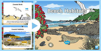 KS1 Beach Habitat Information PowerPoint - Seaside, Animals, Where, Live, Home, Facts, Non-fiction