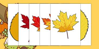 Editable Fall Leaves - fall, fall display, seasons, weather, leaf