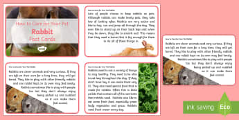 How to Care for Your Pet Rabbit Fact Cards - bunnies, looking after pets, taking care of pets, animal welfare, rabbits, petcare, pet care