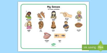 KS1 My Senses Body Parts Word Mat English/Portuguese - My Senses KS1 Body Parts Word Mat - word mat, body, senses, sences, sesnses, sesnes, wordmat, eal