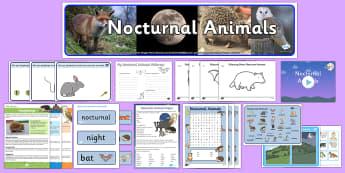 Nocturnal Animals KS1 - Nocturnal animals, resources, activities - Nocturnal Animals KS1 - Nocturnal animals, resources, activities, lesson