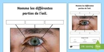 Feuille d'activités : La vue - Les sens (Niveau élevé) - Sciences, œil, eye, vue, yeux, pupille, iris, pupil, paupière, cil, sourcil, brow, lash, lid,Frenc