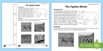 Fynbos Biome Activity Sheet - biome, food web, fynbos, Cape Town, South Africa, natural vegetation, wildlife