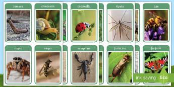 Gli animaletti del giardino Flashcards - gli, insetti, animali, animaletti, italiano, italian, materiale, scolastico, flash, cards, immagini,