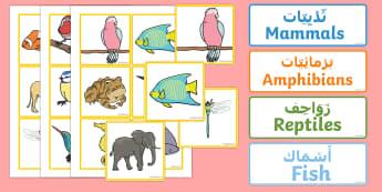 Animal Groups Sorting Cards Arabic/English
