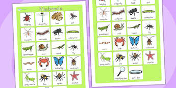 Minibeasts Vocabulary Poster Mat - vocab, vocab poster, insects
