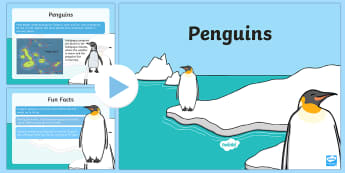 KS1 Penguin Fact File PowerPoint - The Arctic, Polar Regions, north pole, south pole, explorers, penguins, cold, freezing, hunting, fis