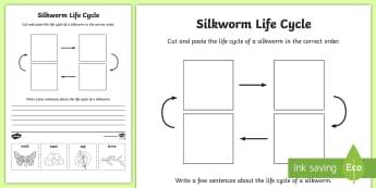 F-2 Silkworm Life Cycle Writing Activity Sheet - silkworms, Australia, life cycle, mulberry, mini beasts, writing,Australia