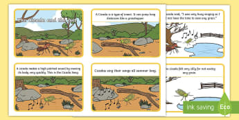 The Cicada and the Ant Story Flashcards - Traditional Thai Tales, fables, stories
