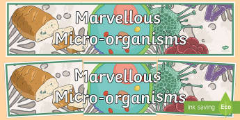 Marvellous Microorganisms Display Banner - australia, Australian Curriculum, Marvellous Micro-organisms, science, year 6, banner, wall display