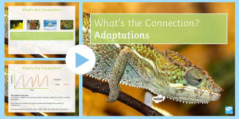 Adaptations What's the Connection? PowerPoint - KS4 What's the Connection?, Interdependence, Abiotic, Biotic, Community, Predator, Prey, Population