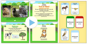 Identifying Herbivores Carnivores and Omnivores PowerPoint Task Setter and Activity Romanian Translation - romanian, carnivores, herbivores, omnivores