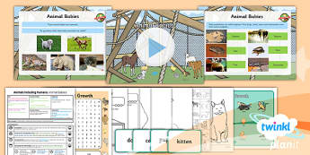 PlanIt - Science Y2 - Animals Including Humans Lesson 1: Animal Babies Lesson Pack - Animal babies, animals and their young, animal life cycles