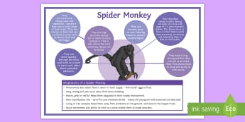 Adaptations of a Spider Monkey Display Poster - extreme environments, survival, rainforest, conditions, climate