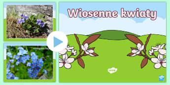 Prezentacja PowerPoint Wiosenne kwiaty - kwiaty, zioła, łąka, przyrodniczy, spacer, wycieczka, zielnik, kaczeńce, pierwiosnki, forsycja,