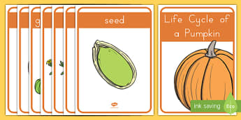 Life Cycle of a Pumpkin Display Posters