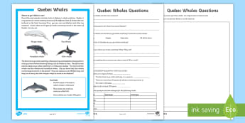 Quebec Whales Differentiated Reading Comprehension Activity - Great Canadian Animals, Canada, animal, animals, whale, whales, Quebec, blue whales, humpback whales