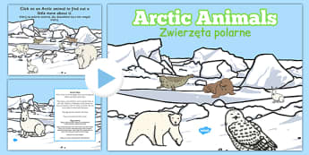 Winter Arctic Animals Habitat PowerPoint Polish Translation - polish, powerpoint, power point, interactive, powerpoint presentation, winter arctic animals, arctic animals, animals, winter animals, winter animals presentation, winter animals powerpoin