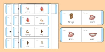 Parts of the Body Loop Cards Te Reo Māori - nz, new zealand, body, loop cards, loop, cards, activity