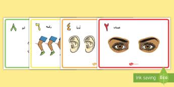 ملصقات عرض العد المزدوج لأعضاء الجسم - عد مزدوج  أعضاء الجسم ملصقات عرض في غرفة الصف رسومات تو