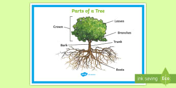 Parts of a Tree Poster - Parts of a Tree Poster - plants, flowers, stem, leaf, roots, leaf, poster, display poter, display, p