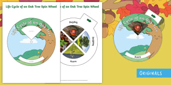 Life Cycle of an Oak Tree Spin Wheel Activity - EYFS, Twinkl Originals, Twinkl Fiction, Autumn, Seasons, Plants and Growth, Growing, seeds, acorn, o
