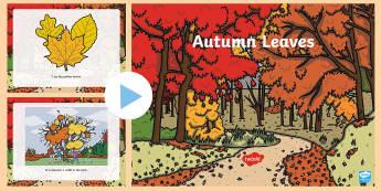 Autumn Leaves PowerPoint  - emergent reader, Autumn, seasons, leaves, colourful leaves, weather, leaf, leaves
