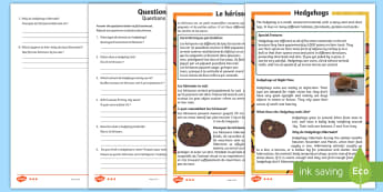 Hedgehogs Differentiated Reading Comprehension Activity English/French  - hedgehog hedgehogs, reading comprehension,EAL French, hedgehog facts, hedgehog information,