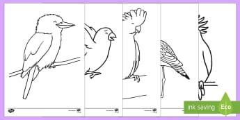 Australian Birds Colouring Pages - Australian Curriculum Biological sciences, Australian animals, Australian fauna, ACSSU017, birds col