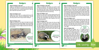 KS1 Badgers Differentiated Fact File - Children's Books, story, book, Easter, save, saving, Easter Bunny, bunny, bunnies, stories, chick,