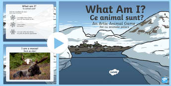 Arctic Animals What Am I Interactive PowerPoint Game English/Romanian - Arctic Animals What Am I Interactive Powerpoint Game - arctic animals, interacive powerpoint, intera