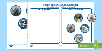 Polar Regions Animal Sorting Activity English/Romanian - The Arctic, Polar Regions, north pole, south pole, explorers, orca, whale, penguin, polar bear, anta