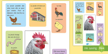 Affiche : La poule - poule, cycle de vie, sciences, cycle 1, cycle 2, cycle 3, hen, chicken, life cycle, Pâques, Easter,