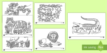 Jungle Mindfulness Coloring Activity  - mindfulness, coloring, jungle, creativity, activity, animals,