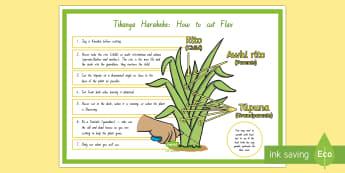Tikanga Harakeke - How to cut flax A4 Display Poster - Te Reo Maori / English - New Zealand Matariki, Matariki, New Year, Maori New Year, Maori, Celebration, Festival, tikanga hara