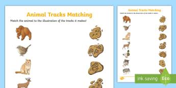 Animal Tracks Matching Activity Sheet - Great Canadian Animals, canada, canadian animals, tracks, prints, paw, matching