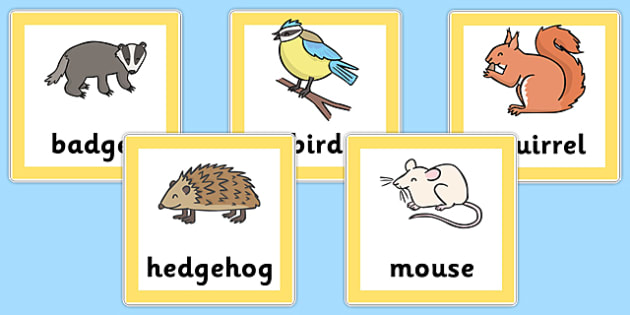Animal Food Chain Cards - Primary Resources, food, animals, food web, carnivore