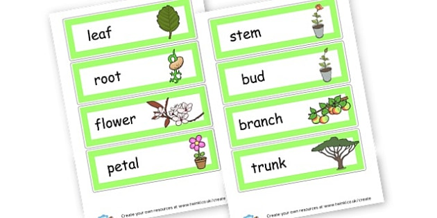 Parts of a Plant - Plants & Growth Literacy Primary Resources, flowers, growing