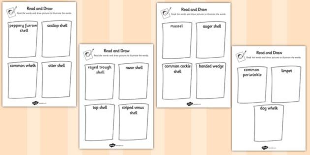 British Seashell Read and Draw Worksheet - british, seashell