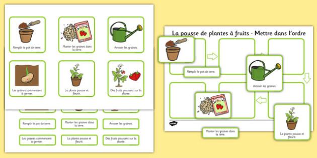 La pousse de plantes à fruits - Mettre dans l'ordre - french, plants, flowers, grow, growing