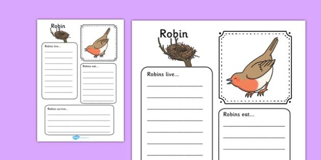 Robin Factfile Worksheet - robin, fact file, factfile, christmas, bird