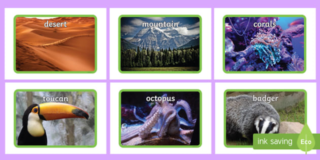 Animals Habitats Display Photos - animal display, photo display