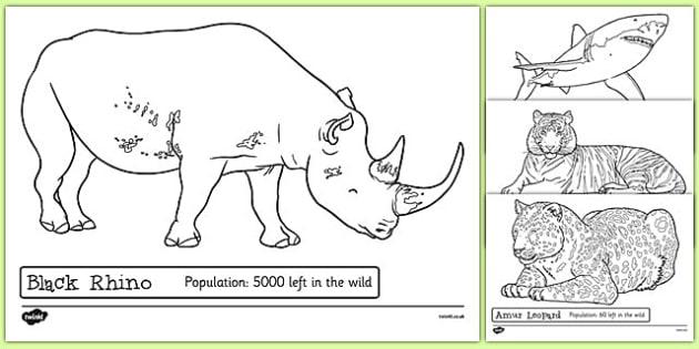 Endangered Animals Colouring Sheets - endangered, animals, colouring sheets, colouring, colour